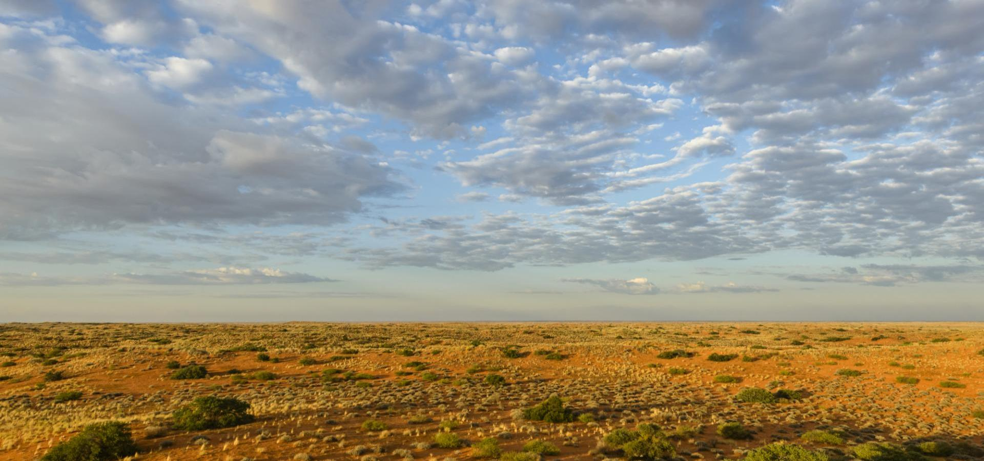 Panorama der Central Kalahari in Botswana