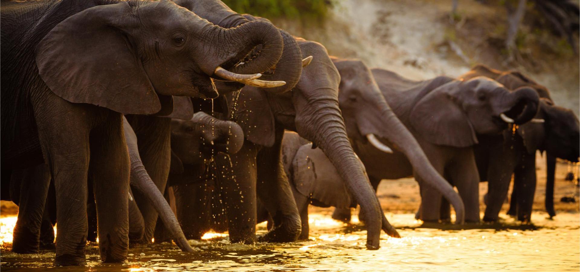 Elefanten im Chobe Nationalpark an einem Wasserloch bei Sonnenuntergang