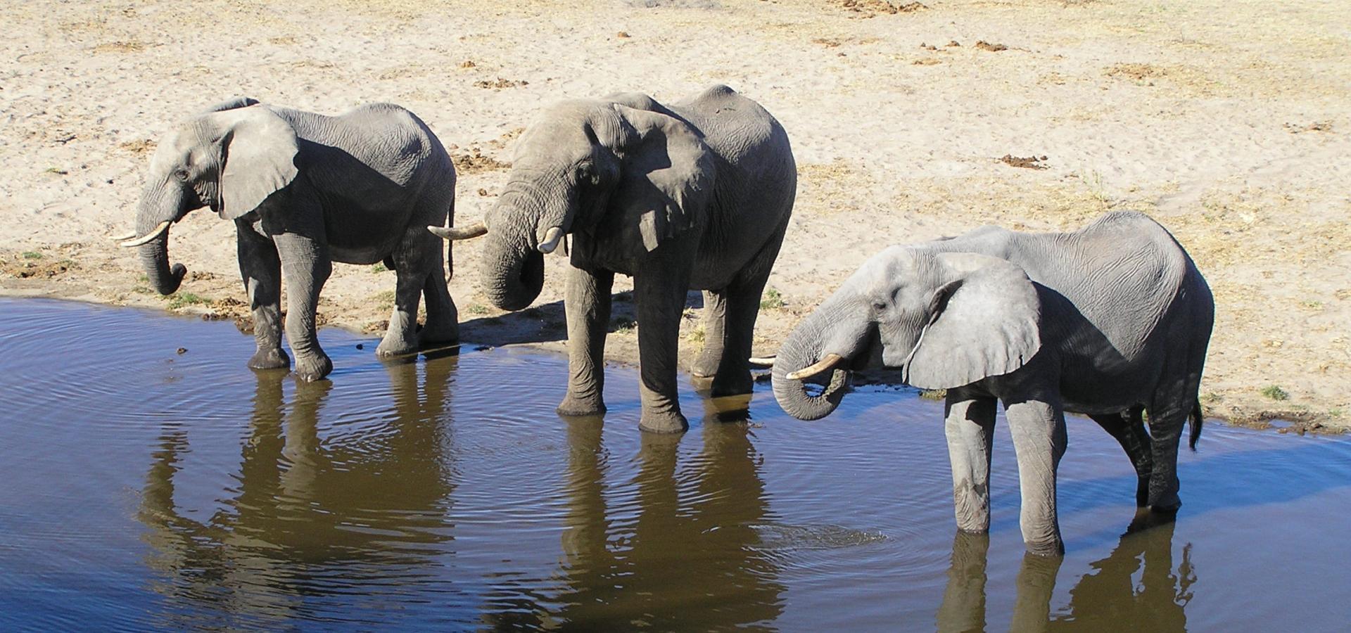 Von Ihrer Lodge an der Grenze des Makgadikgadi National Parks können Sie Wildtiere am Boteti Fluss beobachten