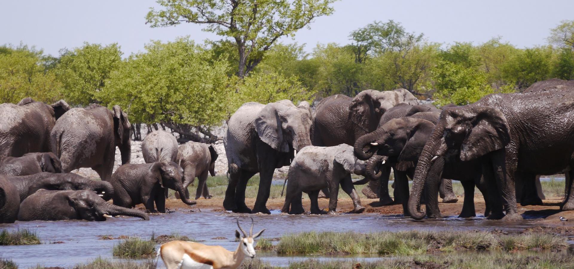 22-tägige Kleingruppen-Lodge-Safari von Windhoek nach Victoria Falls durch Namibia, Simbabwe und Botswana