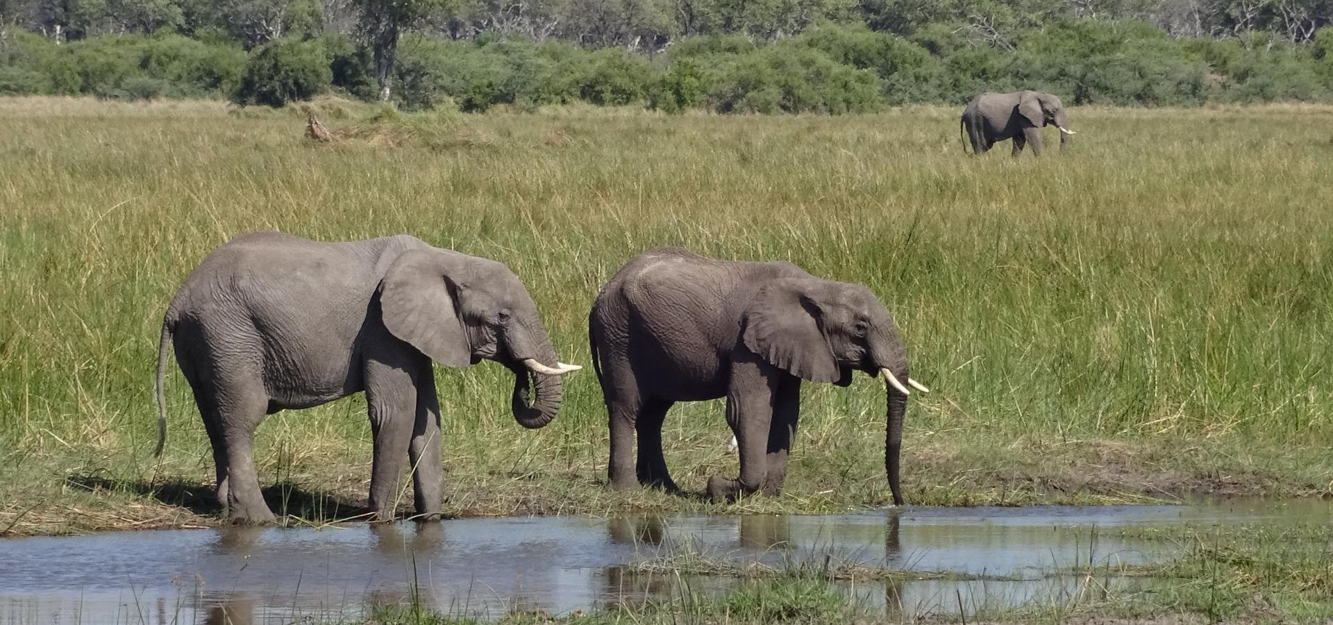 Machen Sie aufregende Tierbeobachtungen im facettenreichen Naturparadies des Okavango Deltas in Botswana