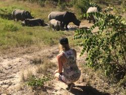 Bei den Nashörnern