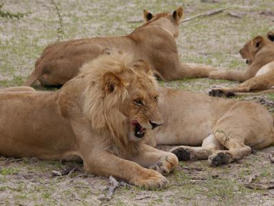 """Machen Sie sich auf die Suche der """"Big 5"""" - Löwe, Elefant, Leopard, Büffel und Nashorn - in den artenreichen Wildreservaten Botswanas"""