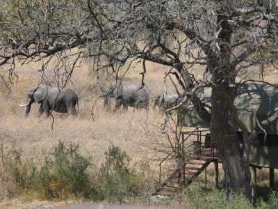 """Beobachten Sie von Ihrer """"Tented Suite"""" in der Nkasa Lupala Lodge in Namibia die vorbeiwandernden Elefanten"""