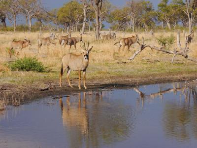 Erleben Sie die einzigartige Flora und Fauna des Okavango Deltas in Botswana
