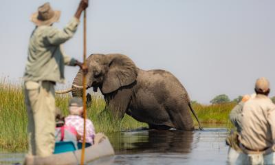 Fahrt im Mokoro durch das Okavango Delta: Elefanten voraus