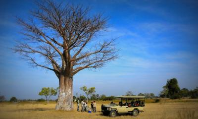 Reisegruppe unter einem Baum mit ihrem Safari Jeep im Okavango Delta