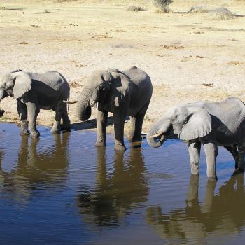 Fly-In Safari zu den Highlights Botswanas und zu den Viktoria Fällen